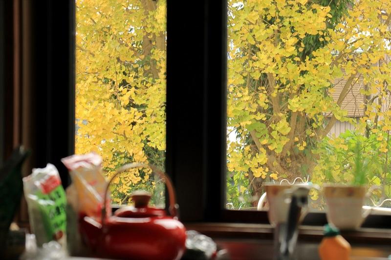 家の窓から見える外の風景