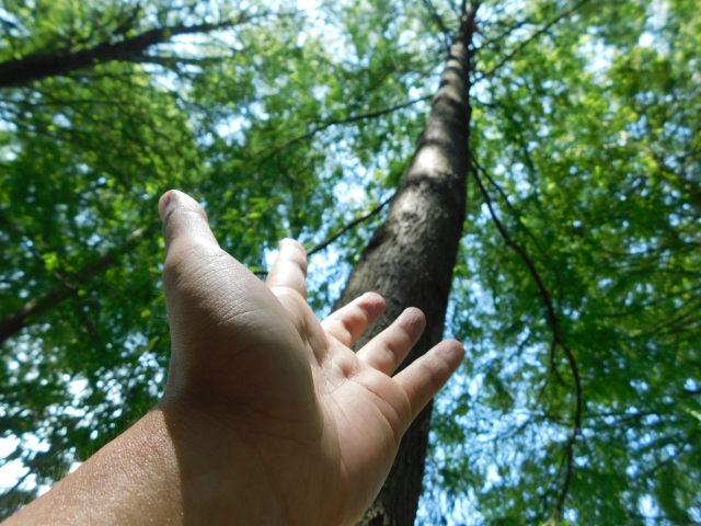 気を取り入れようと木々に向かって手を伸ばす人