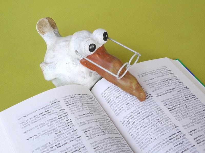 鳥が辞書を読んでいる